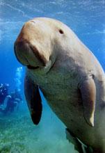 Vízi emlősök